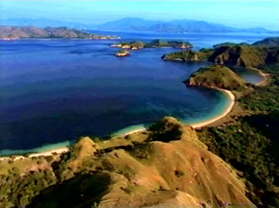 The Natural Beauty Of Komodo Island Is Reflected From A Lush Forest