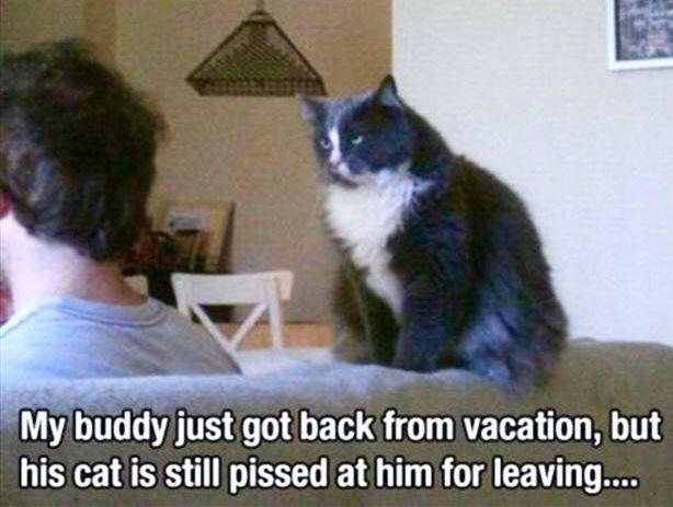 Grumpy Cat Leaving Meme