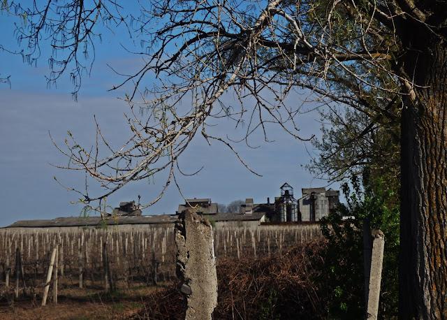 Mołdawska winnica z... kołchozem