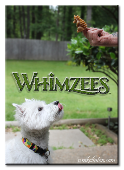 Westie licking his mouth over Whimzees.