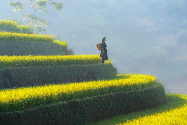 5 Great Homestay For 'Hunting' Ripe Rice In Mu Cang Chai 1