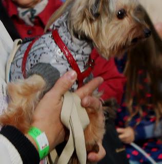 Дама с собачкой: на руке - ленточка со штрих-кодом