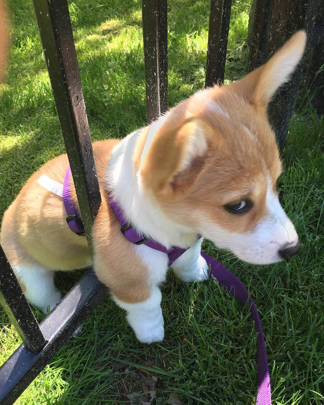 Cute dogs - part 190, cute dog images, best funny dog pictures