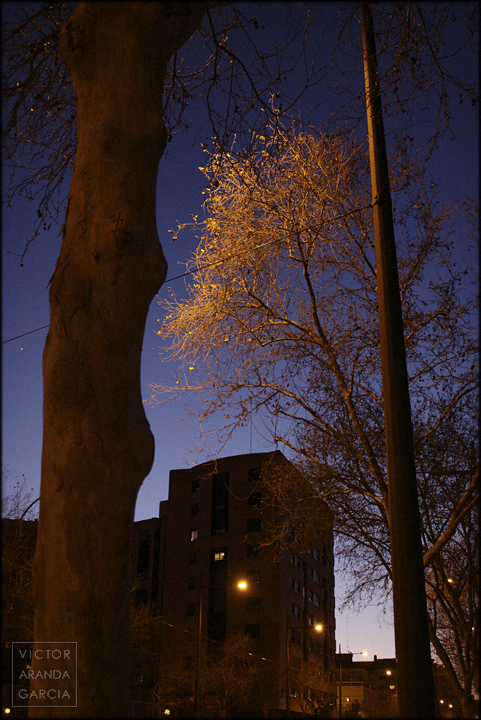 fotografía, Valencia, noche, naturaleza, Night Leaves, árbol, tungsteno