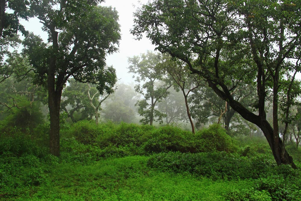 KGudi Jungle Lodges, Monsoons in BR Hills