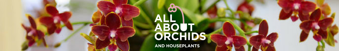 All About Orchids and Houseplants