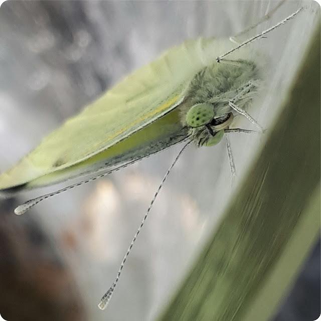 foto farfalle bambini