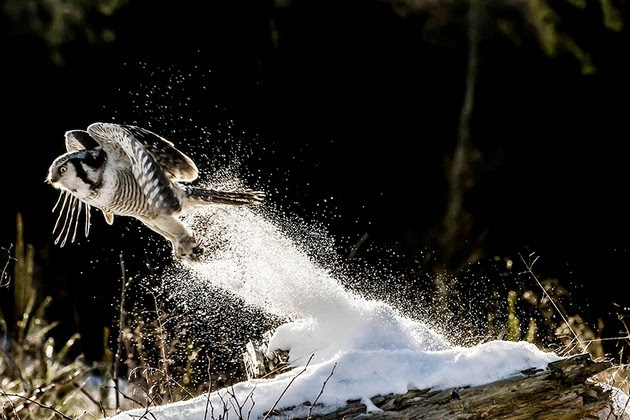 breathtaking pictures of owl-1