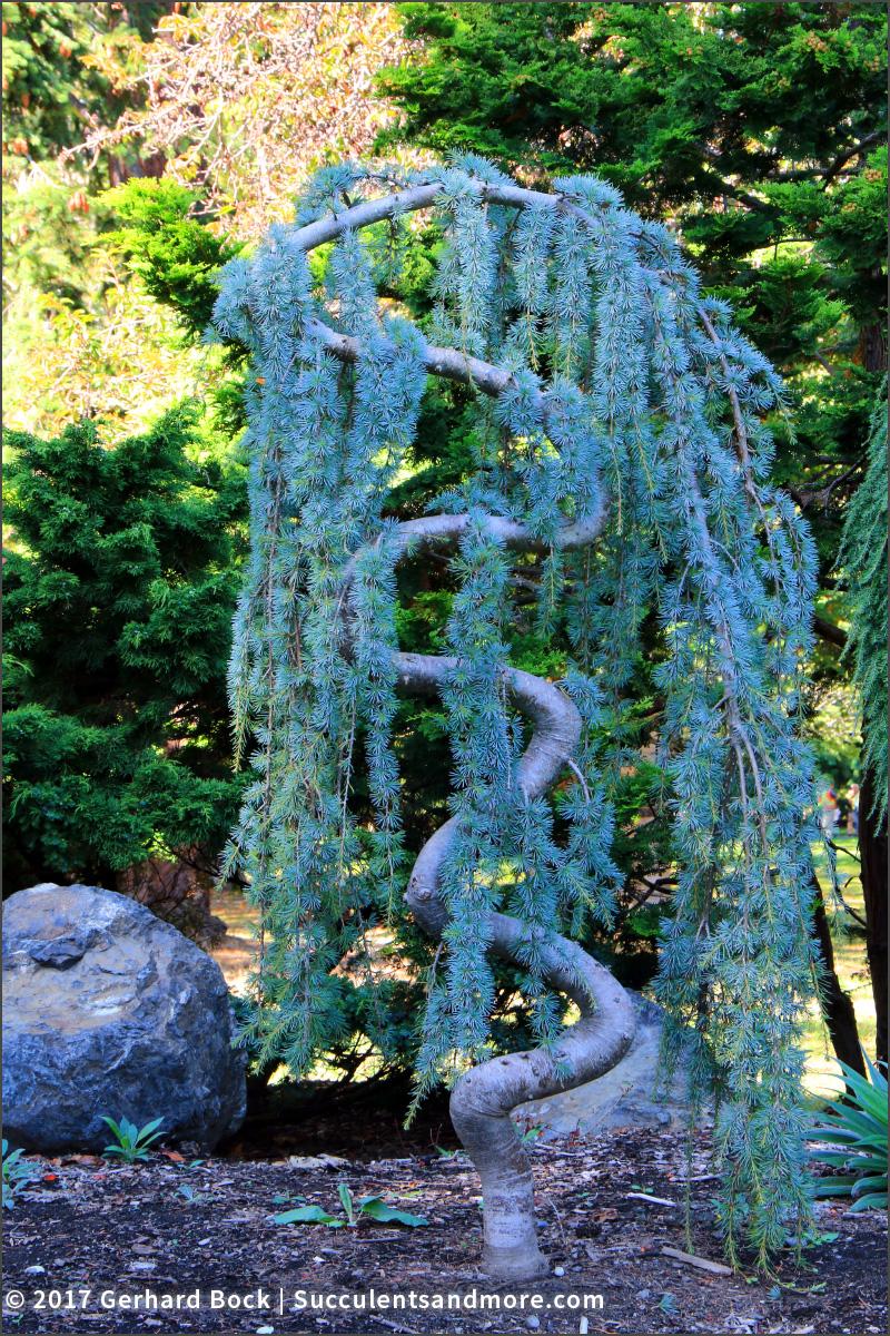 Ornamental Grasses Victoria Bc : Succulents back to victoria british columbia