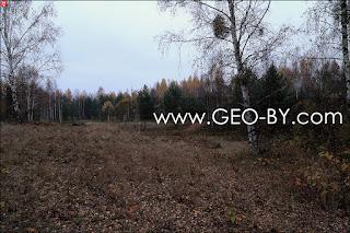 Puszcza Nalibocka. It's time to go back. Plexus twigs on a birch tree