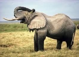 670 Gambar Hewan Hewan Terbesar Di Dunia Gratis Terbaik