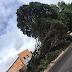 Árvore tomba na av. Alexandrino de Alencar