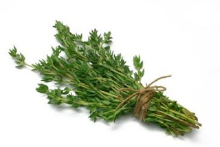 Thyme Herb Medicinal Uses