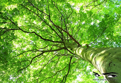 Lingkungan Hidup, Lingkungan Hidup Manusia, Unsur Biotik, Unsur Sosial Budaya.