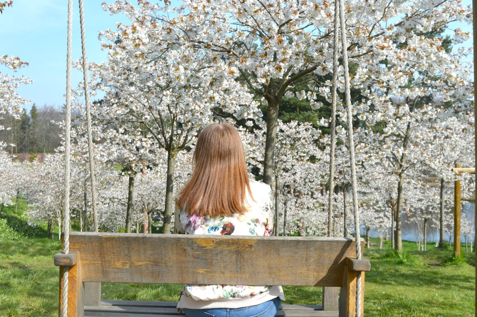Blossom Orchard Swings Alnwick Garden