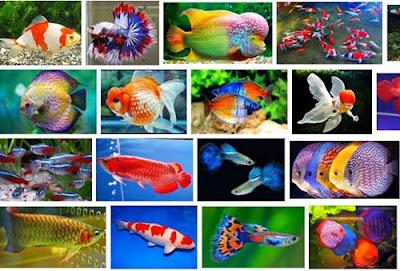 Nama-Nama Ikan