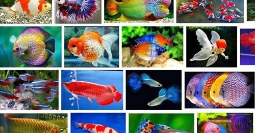150 Nama Nama Ikan Beserta Nama Latinnya Lengkap Air Laut Air Tawar Infoakurat Com