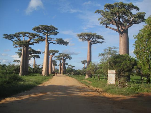 alley baobab morondava