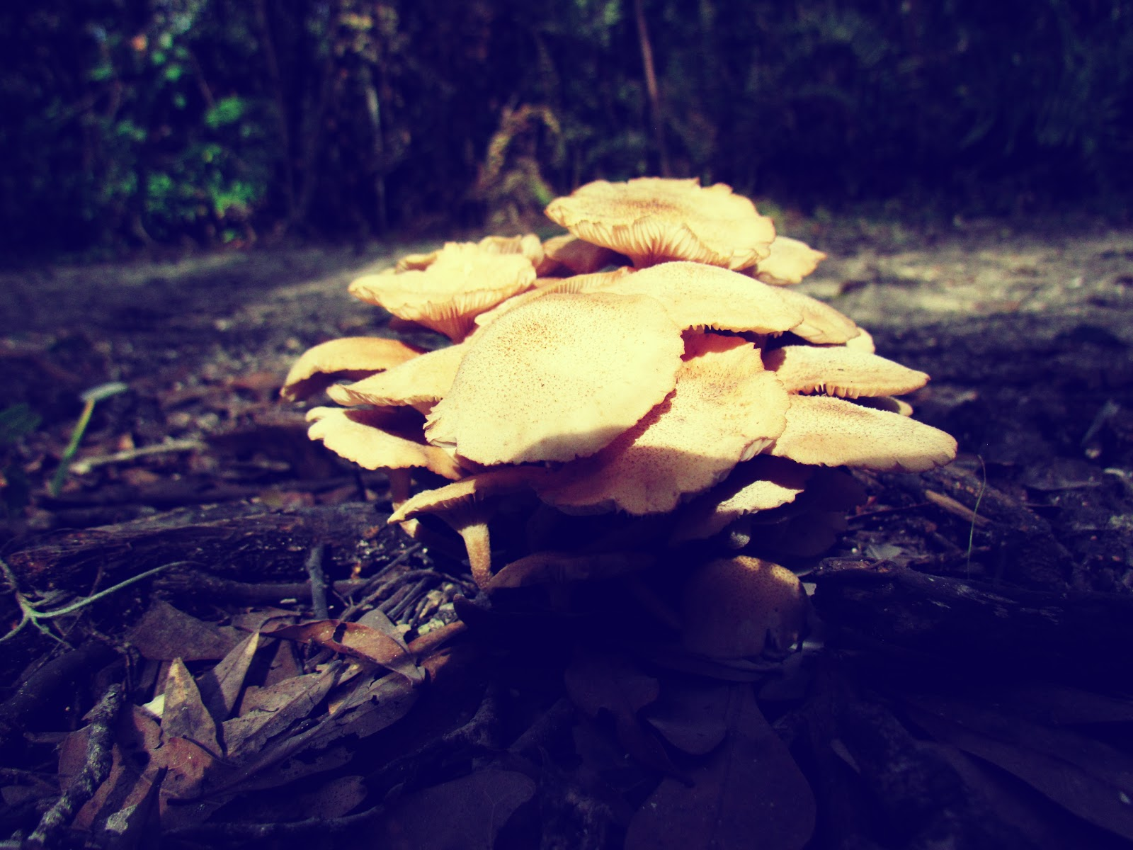 Mushroom Fairy Rings + Edible Mushrooms for Hiking Pretty