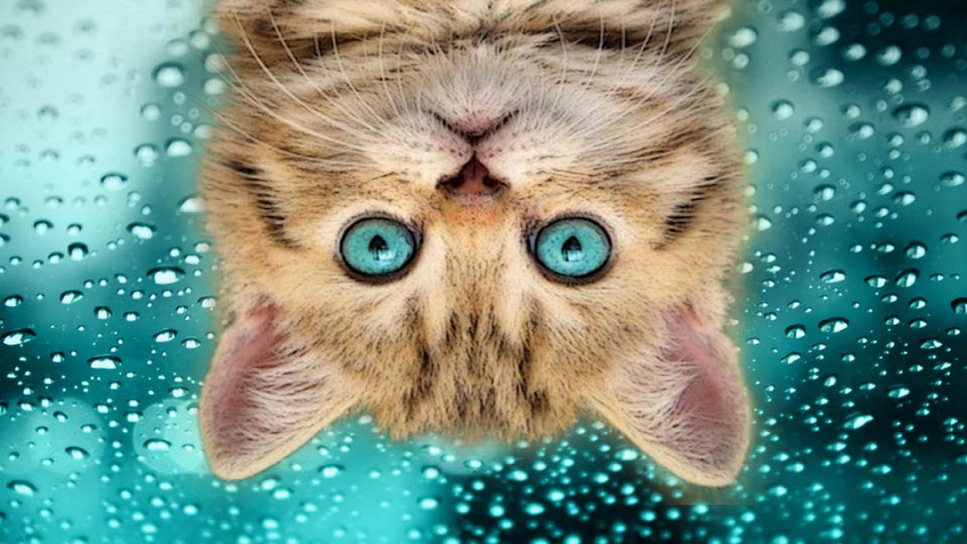 Funny cat images for laugh humorous hd wallpaper for Fond ecran drole