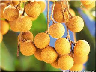 Longan fruit (Dimocarpus longan) asian fruit image