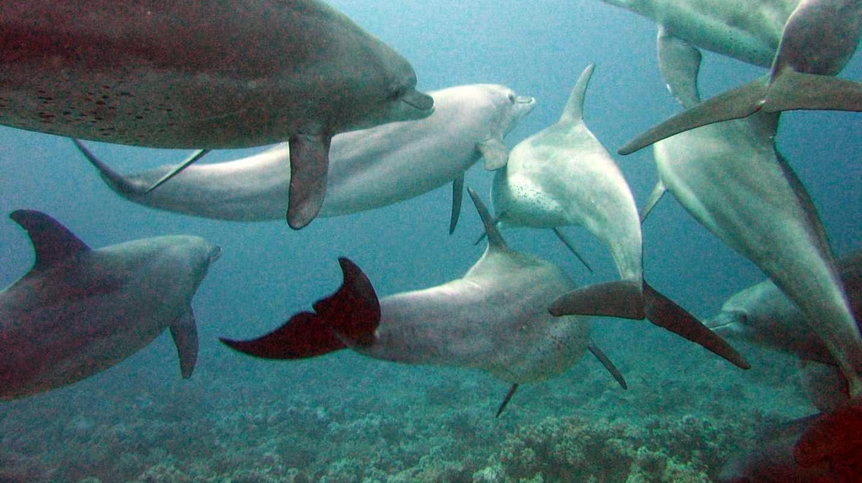 Grupos de delfines en el mar