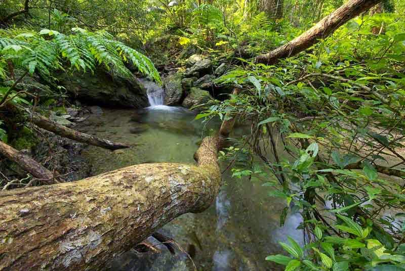fallen tree, stream, jungle, Okinawa