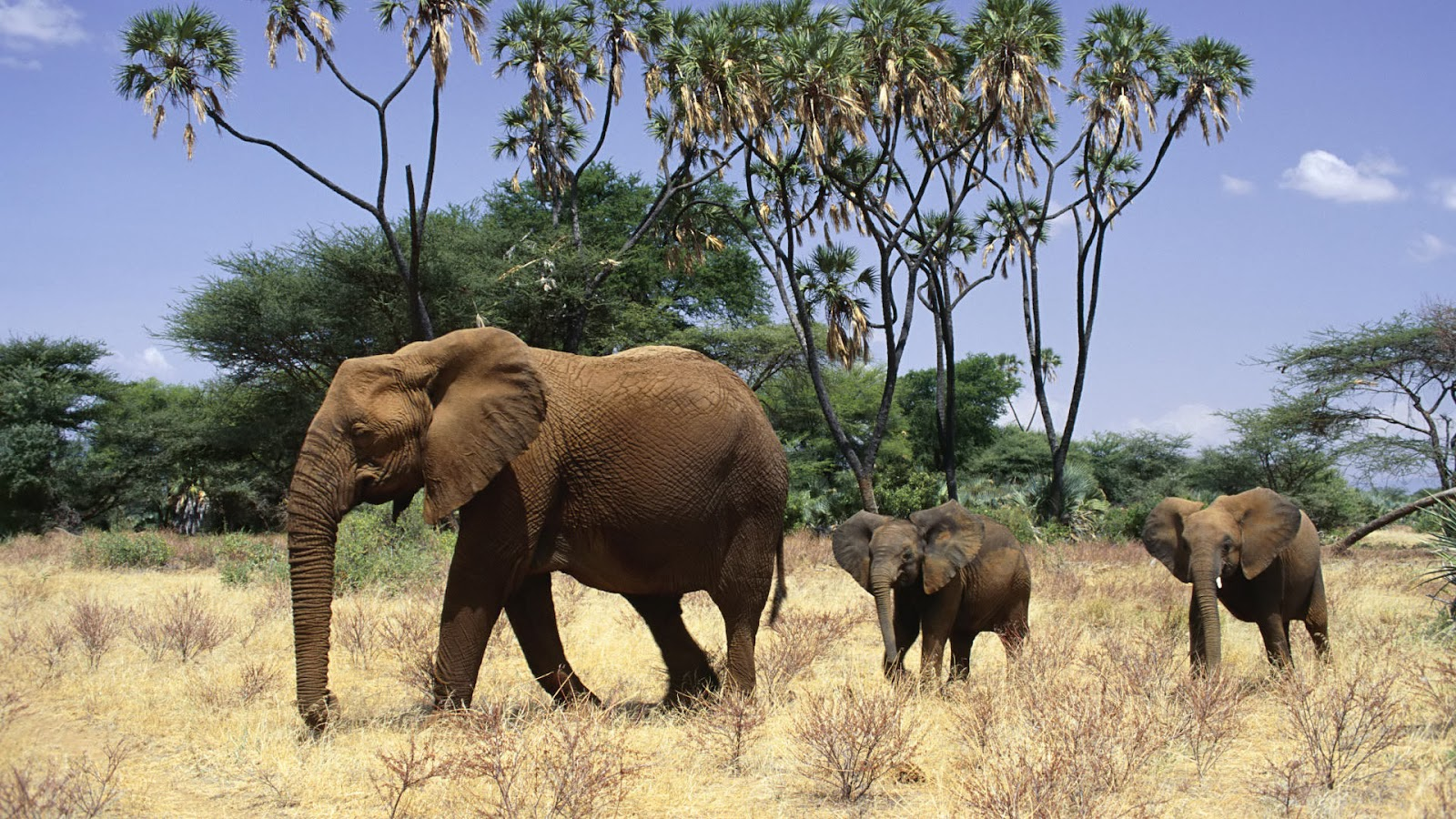 Beautiful Pictures Of Elephant In Hd: Beautiful African Animals Safaris: Beautiful African Red
