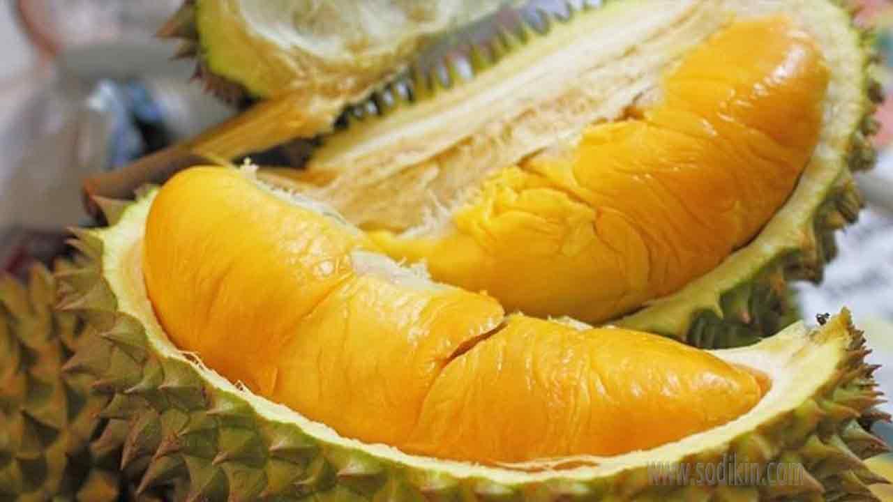 akta-durian-tidak-mengandung-kolesterol-jahat-ldl