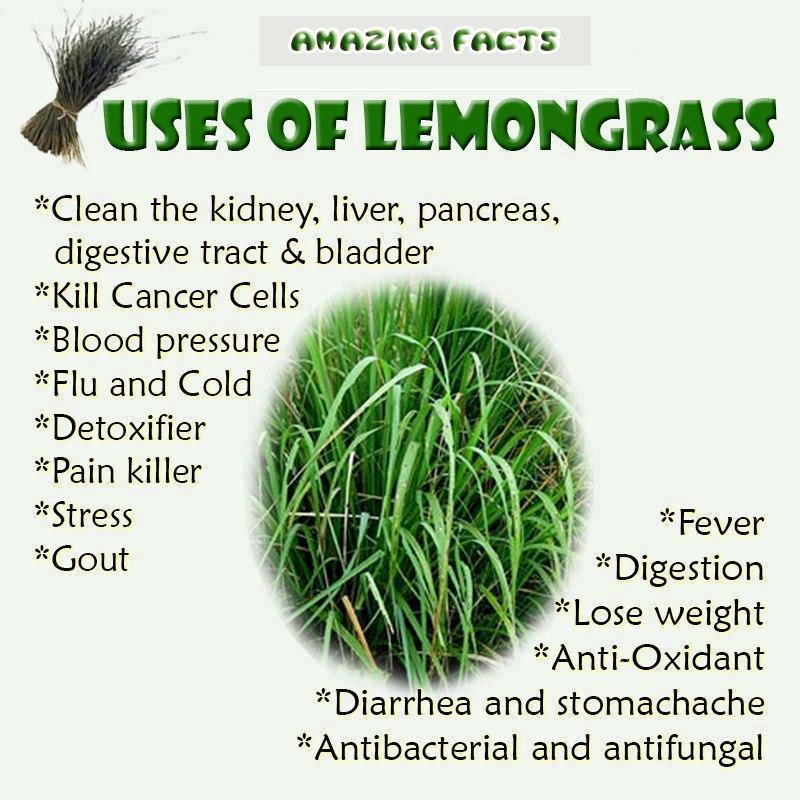 lemongrass essential oil - photo #37
