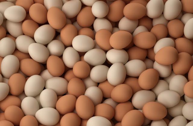 Fakta Tentang Telur - Berapa Banyak Protein Dalam Telur