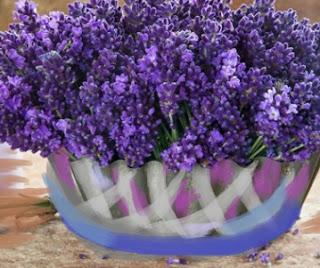 Como cultivar alfazema e receita ch de alfazema portal dicas Cultivar lavanda en casa
