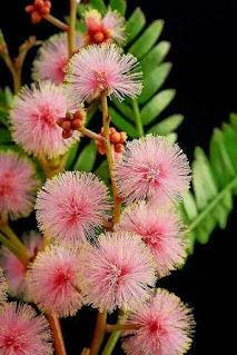 احلى صور الورد الرائعة
