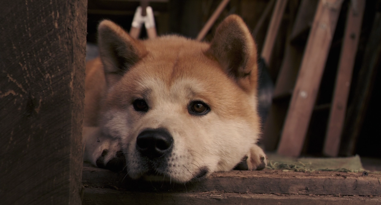 Hachiko Movie Dog Breed