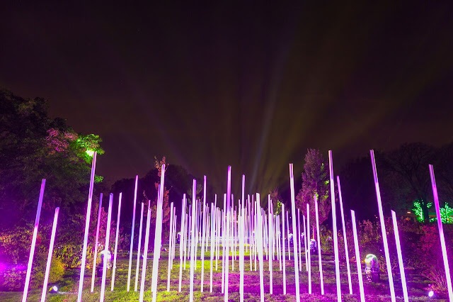 Fantasy Forest at Illumination