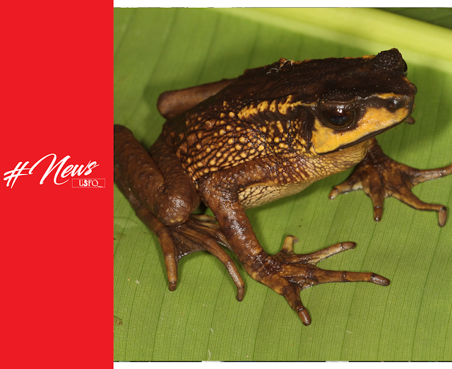 Sapo Andino que se creía extinto se redescubre en Ecuador