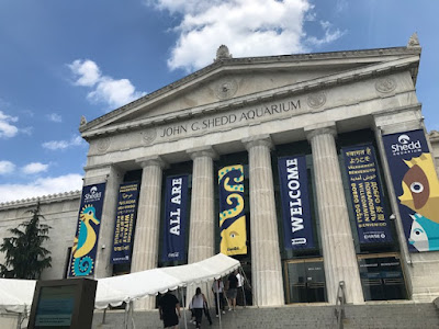 Shedd Aquarium in Chicago Review