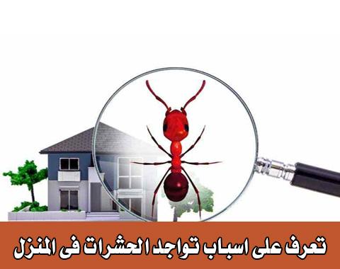 اسباب تواجد الحشرات فى المنزل