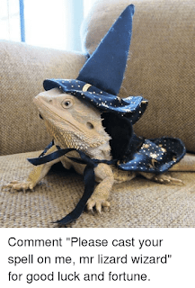 https://www.reddit.com/r/aww/comments/5bukoz/youre_a_lizard_harry/