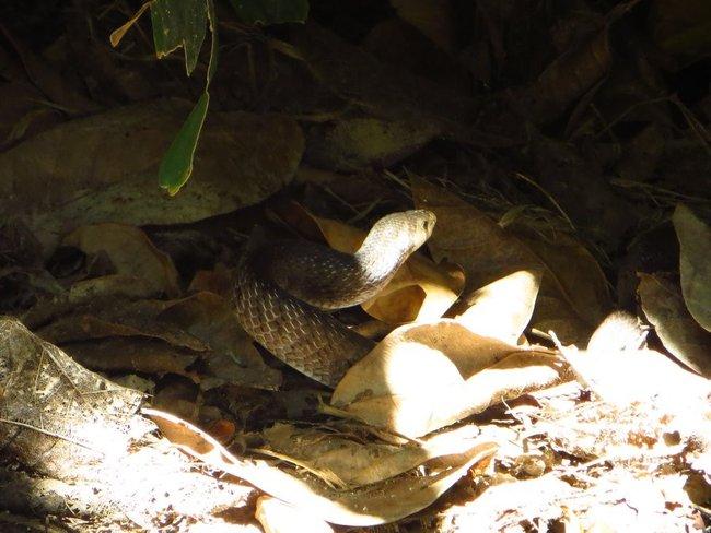 Змея возле дома