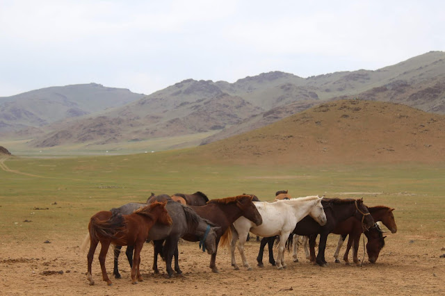 Oldest evidence of horse veterinary care discovered in Mongolia