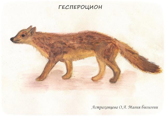 геспероцион-вымершие псовые-пошаговое-рисование