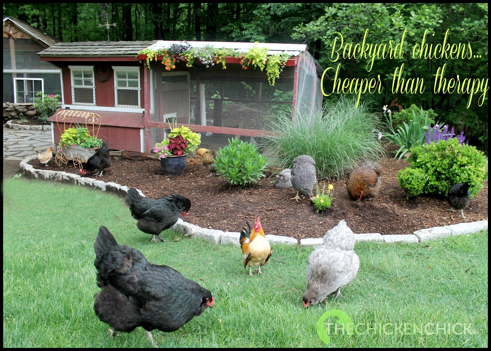 Farm & Country Radio Interview with The Chicken Chick ...