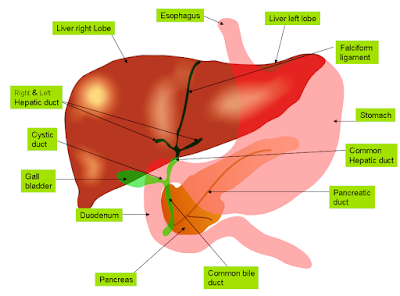 7 Foods for Healthy Liver