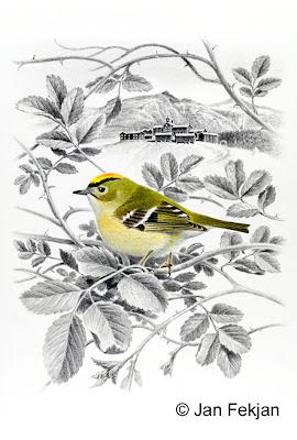 Bilde av digigrafiet 'Fuglekonge'. Digitalt trykk laget på bakgrunn av et maleri av en fugl i sommerlandskap. En illustrasjon av fuglekonge, Regulus regulus. Fuglen sitter i en rosebusk med rosekvister og blader som omkranser fuglen og en stor gård, kongsgården, i bakgrunnen. Stilen kan beskrives som figurativ og realistisk. Bildet er i høydeformat.