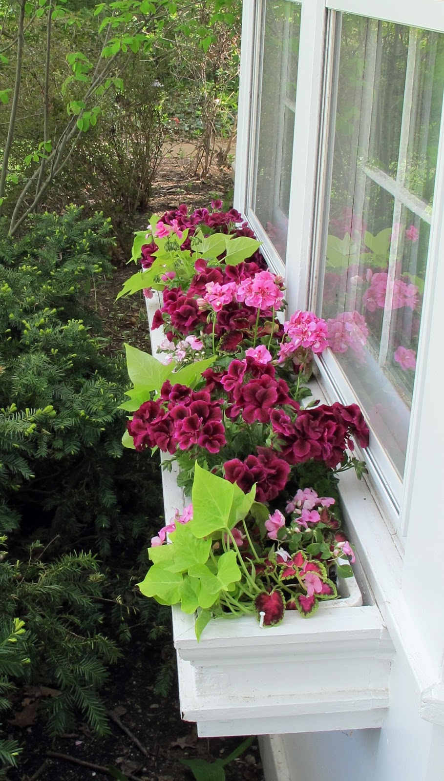 Just Grand Window Boxes