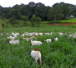 Usaha Sewa Lahan untuk Gembala Hewan