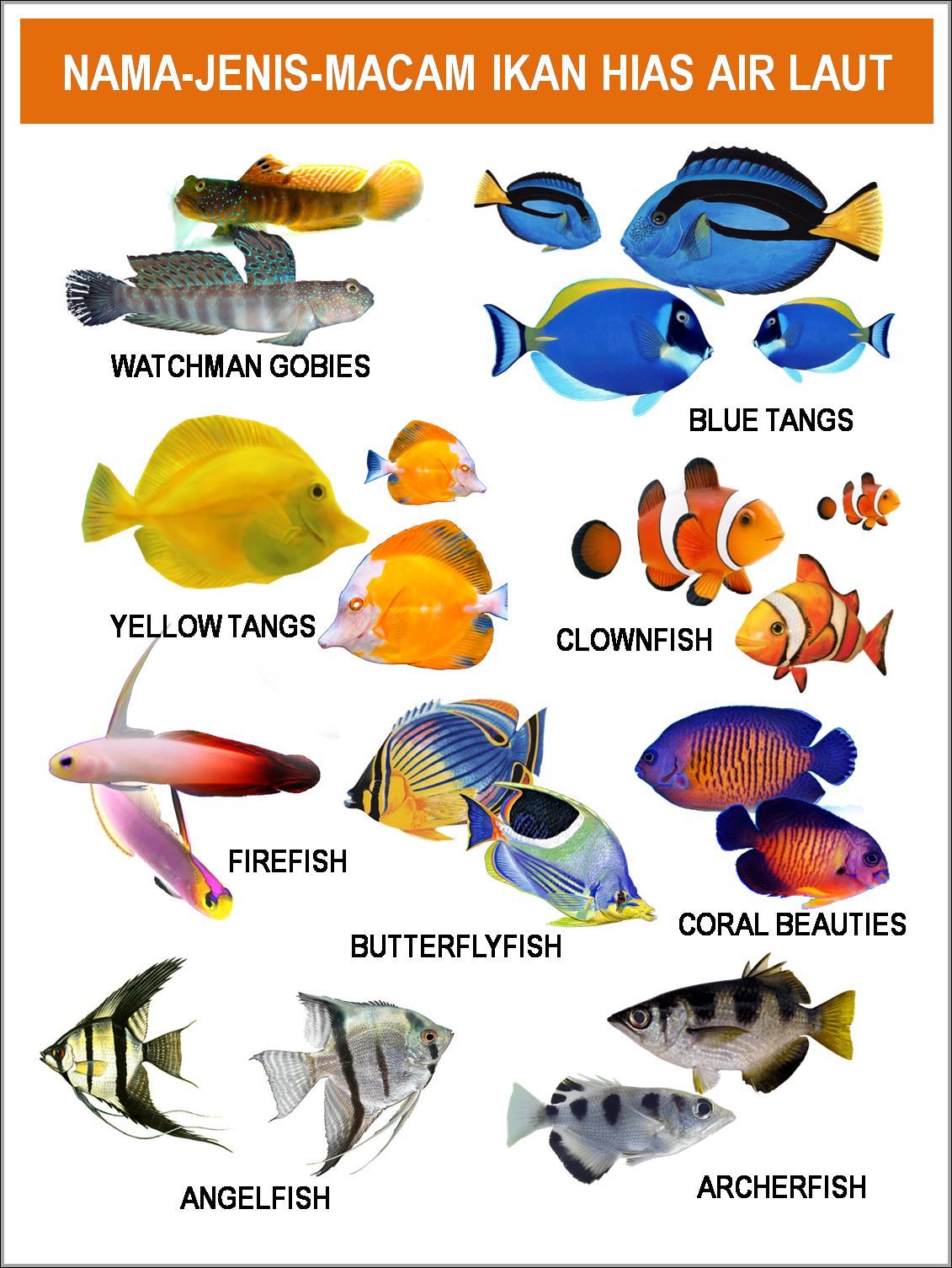 Mackerel tuna · kakap : GAMBAR│FOTO│JENIS-MACAM-NAMA IKAN HIAS AIR LAUT   freewaremini