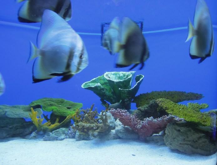 Fishes and corals at Manila Ocean Park oceanarium