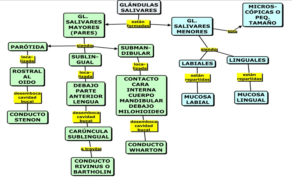 MAPAS CONCEPTUALES SOBRE LA SALIVA (CONCEPTUAL MAPS ABOUT SALIVA ...